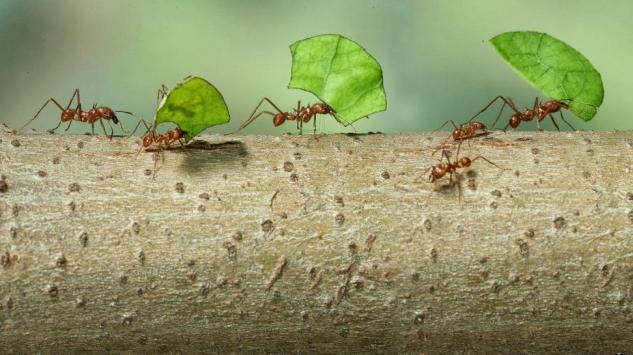Riješite se dosadnih mrava i paukova