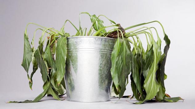 Vratite oronulu biljku u život uz pomoć ova 3 sastojka iz kuhinje!