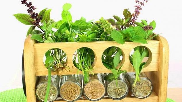 Začinske biljke koje možete uzgajati u svom domu