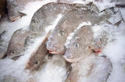 Odmrzavanje ribe