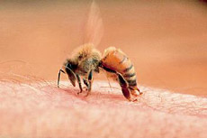 Odbranite se od insekata