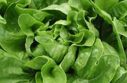 Kako osvježiti uvenulu zelenu salatu