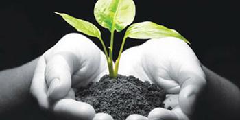 Mršavljenje – da li biljke pomažu?