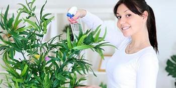 """Ove čarobne biljke su  """"žderačice"""" alergena, otrova i dima u domu"""