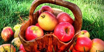 Dijeta na bazi jabuka