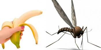 Bananom, lavandom i limunom protiv komaraca