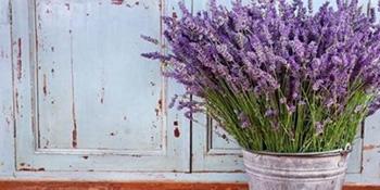 5 ljekovitih biljaka koje treba da imate u svom domu