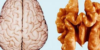 Interesantno podudaranje: izgled ploda pokazuje koji organ liječi