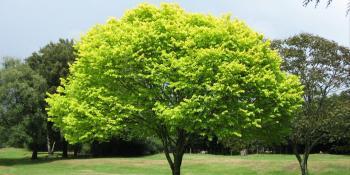 Koje je vaše drvo?