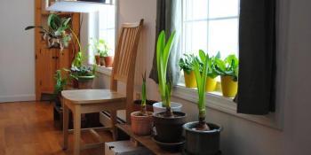 Kako da pomognete sobnim biljkama da prezime