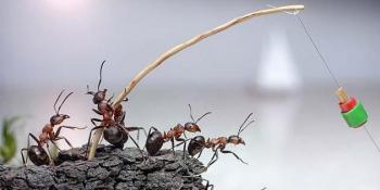 Kako se efikasno riješiti mrava prirodnim putem