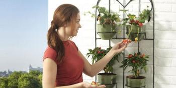 Kako da uzgajate povrće na svojoj terasi