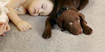 Prirodnim osvježivačem uklonite neprijatne mirisa iz tepiha
