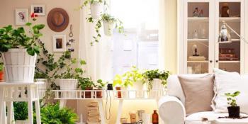 Sobne biljke koje nas čuvaju od buđi