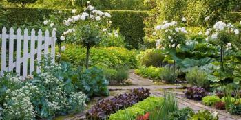 Ljekovito bilje koje možete da uzgajate na terasi