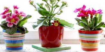Ako vam i pored silnog truda cvijeće vene i ne uspijeva, pokušajte ovaj sjajan trik
