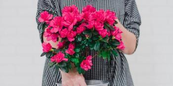Šta treba da znate o ružama stablašicama?