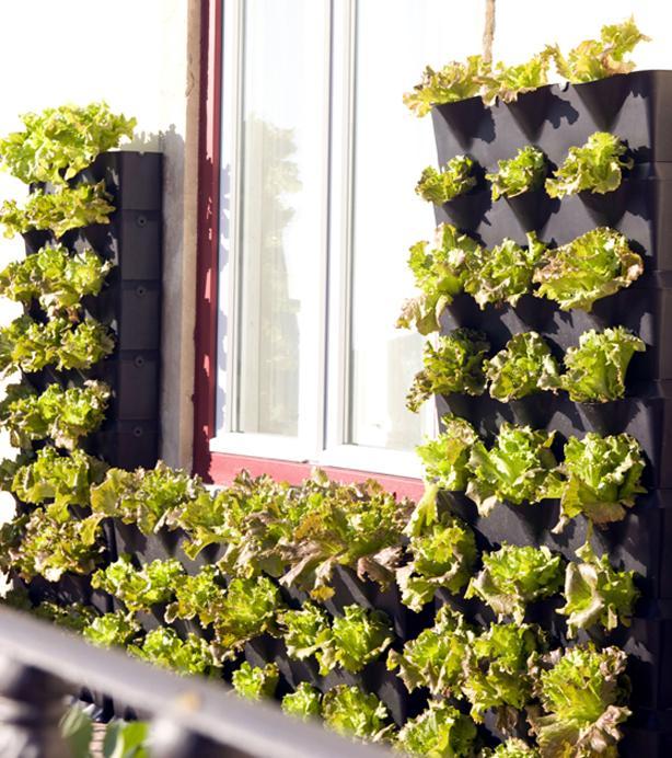Kako da uzgajate povr e na svojoj terasi for Balcony surrounds
