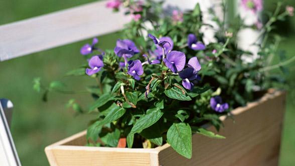 Dekorativno uređenje vrta ! – Dobar izbor – Web portal za vaš dobar izbor!