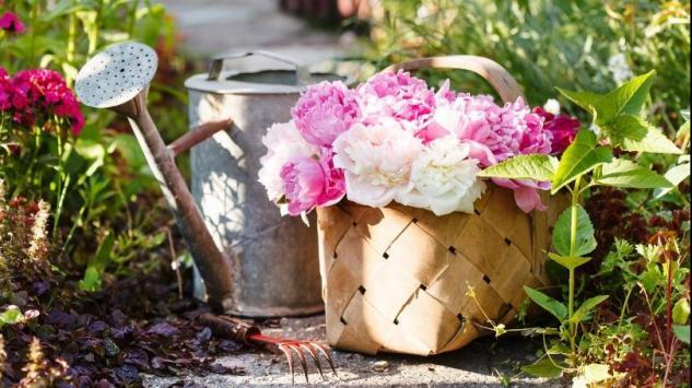 Naučite da zalivate cvijeće na pravilan način