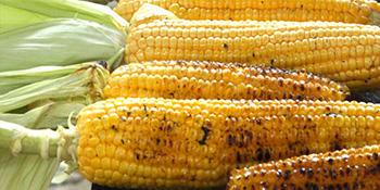 Kukuruz - odličan izvor energije
