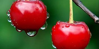 Lijek iz voćnjaka - trešnje bolje od aspirina