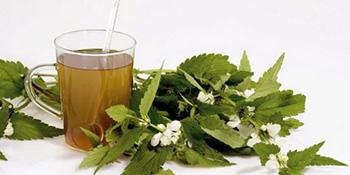 Čaj od koprive - rješenje za brojne zdravstvene tegobe