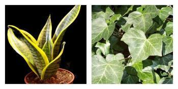8 najboljih biljaka za pročišćavanje vazduha u prostoriji