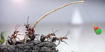 Sedam trikova s kojima ćete »potamaniti« dosadne mrave