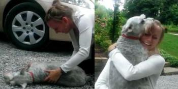 Kada se poslije 2 godine vratila kući, njen šnaucer se onesvijestio od sreće!