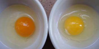 Kako prepoznati jaje od organski uzgajanih kokošaka