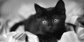 Zašto vjerujemo da crne mačke donose nesreću