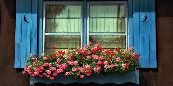 Oživite prozore cvijećem