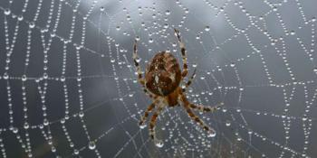 Kako se riješiti paukova iz kuće