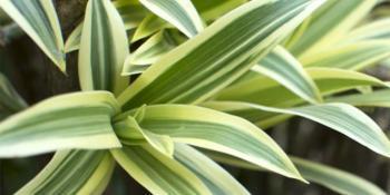 Ove biljke nam pročišćavaju vazduh u prostorijama!