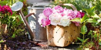 Evo zašto je božur miljenik ljubitelja cvijeća