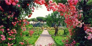 Kako da samo uz pomoć ruža oplemenite svoje dvorište