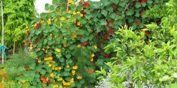 Zašto treba gajiti autohtone vrste cvijeća?